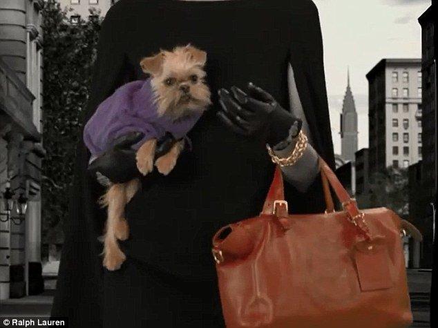 bolsa para cães ralph lauren