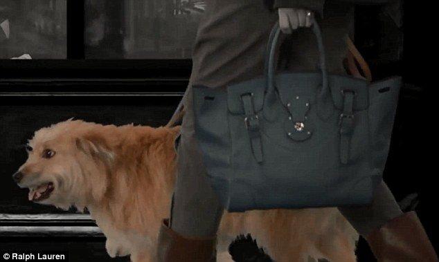 cachorrinho carente na campanha de lançamento de acessórios da ralph lauren