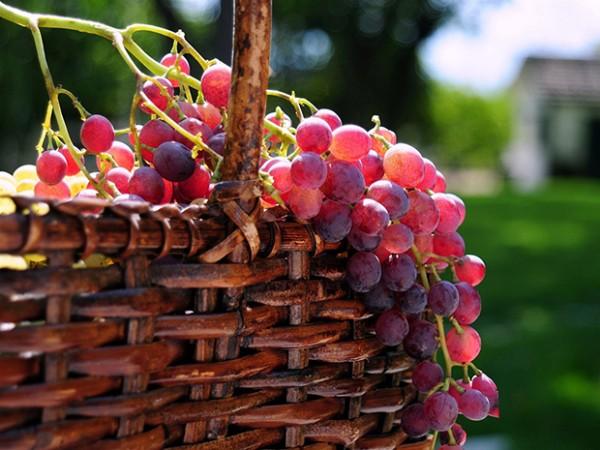 uvas vermelhas para conseguir uma pele impecável