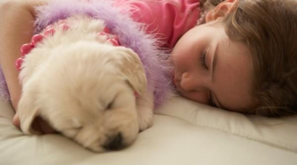 dormir com cachorro
