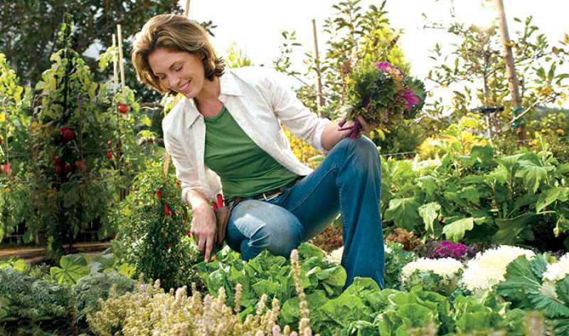 jardins ideias criativas : jardins ideias criativas:formas criativas de criar hortas e jardins caseiros utilizando