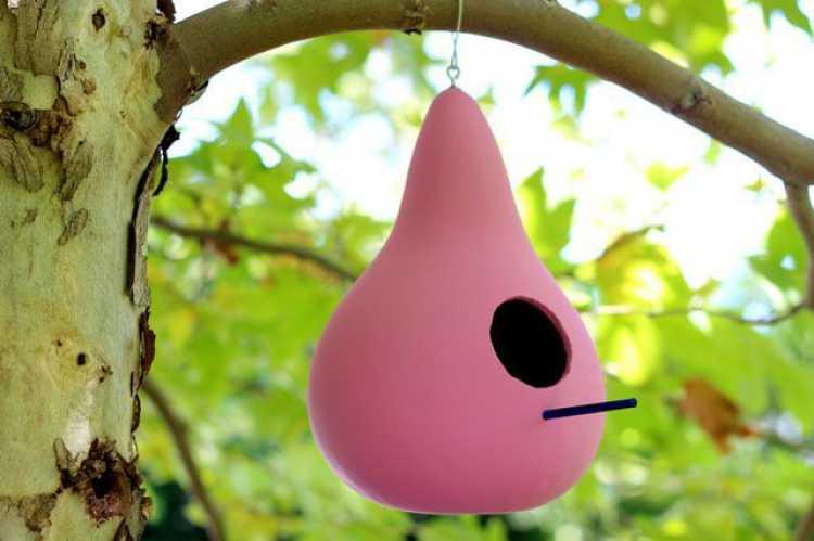 Faça os pássaros sentirem-se em casa