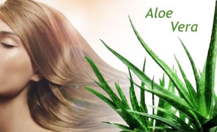 Benefícios do Aloe Vera para os Cabelos