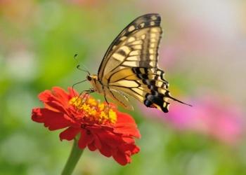17 Espécies de flores para atrair borboletas