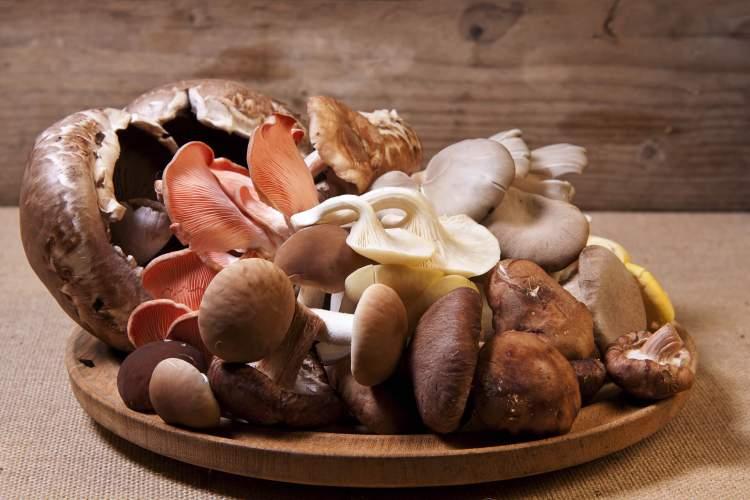 Cogumelos são alimentos ricos em proteínas