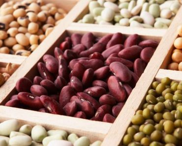 sementes são alimentos ricos em proteínas