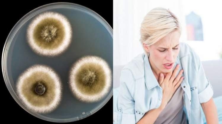 Saiba como identificar e tratar a doença do mofo