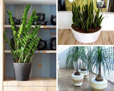 Plantas para Colocar Dentro de Casa e que Não Precisam de Muita Água