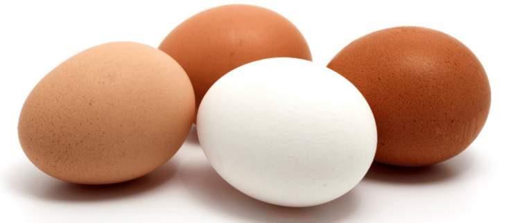 O ovo é um dos alimentos que realmente ajudam a eliminar gordurinhas