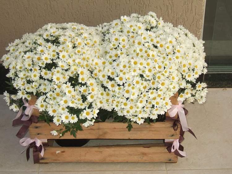 Arranjo de flores em caixote de madeira