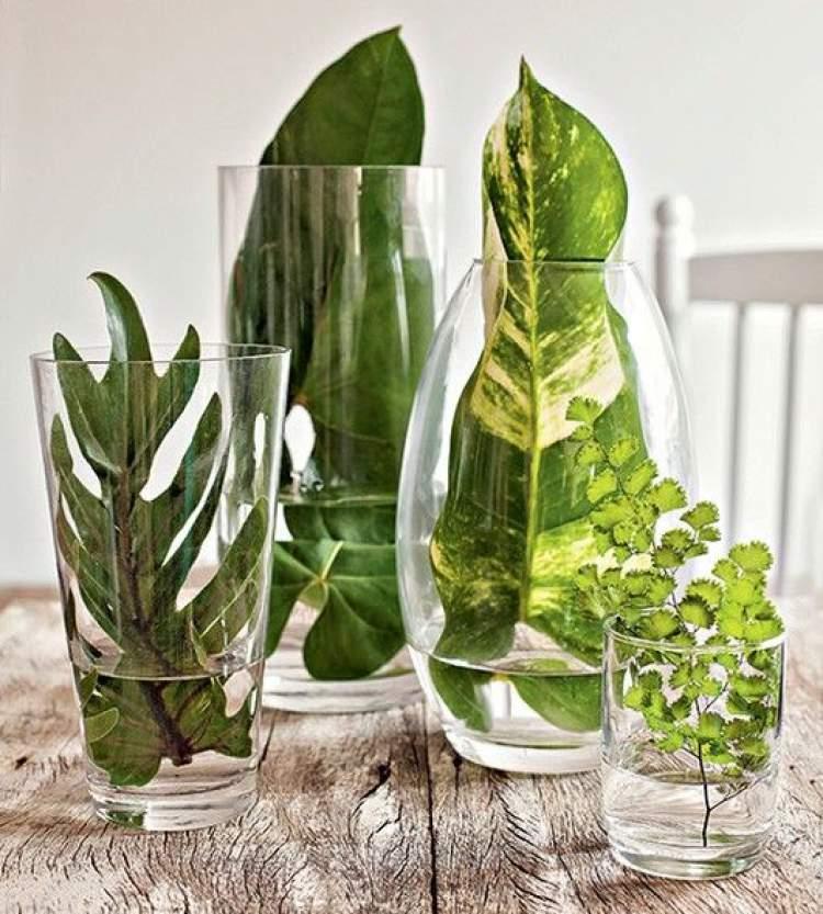 Folhas verdes em vasos transparentes
