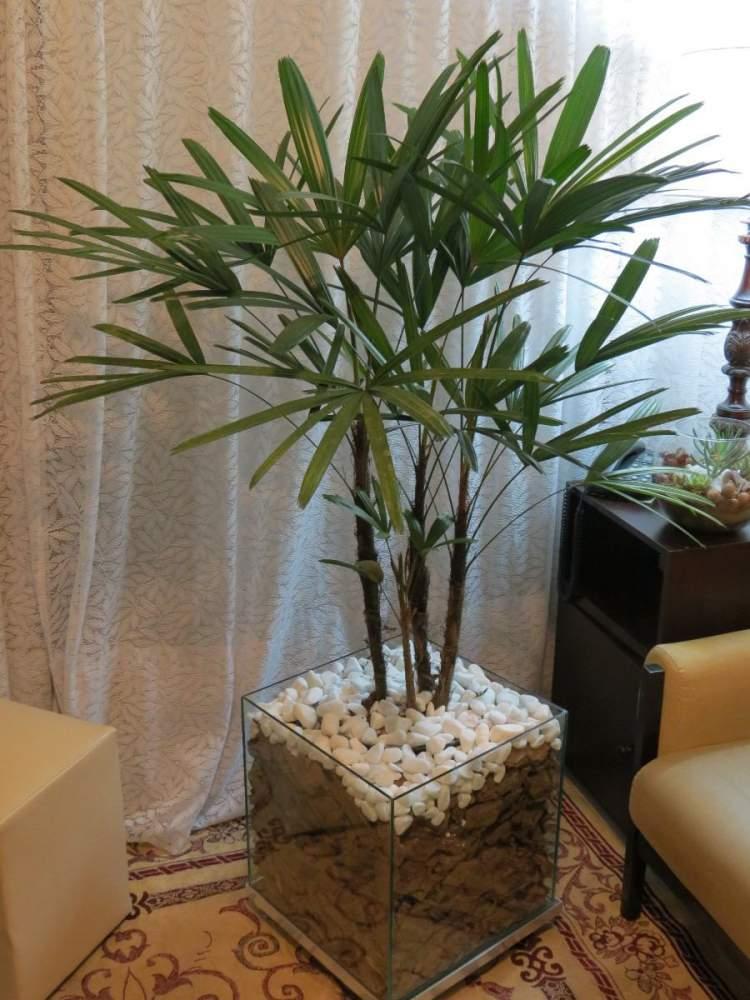 24 plantas perfeitas para decorar o interior da sua casa for Tipos de plantas para decorar interiores
