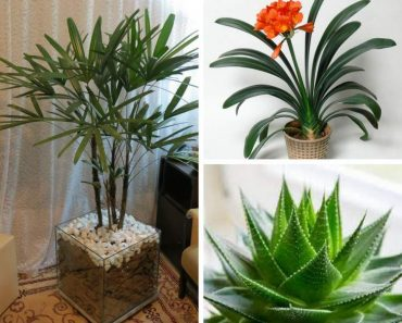 Plantas perfeitas para decorar o interior da sua casa
