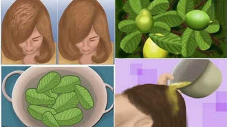 Pasta de abacate contra queda de cabelo