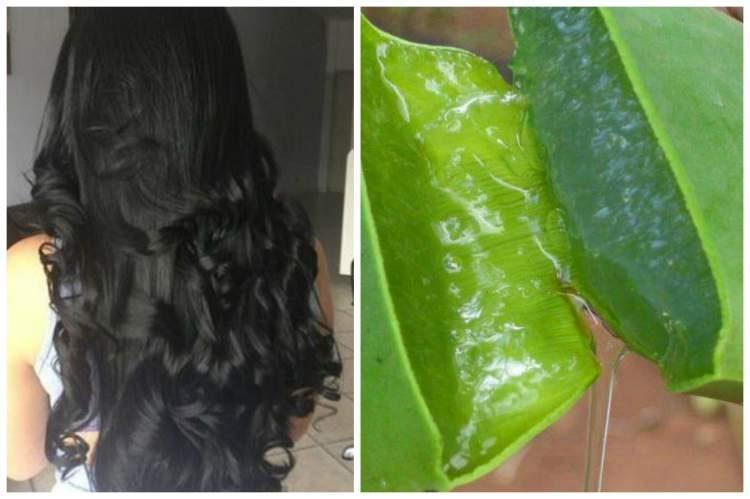 Use babosa para dar volume aos cabelos finos