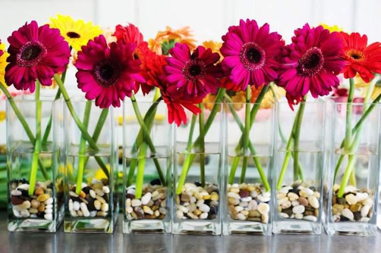 Gérbera é uma das plantas para decorar o apartamento com muita elegância e bom gosto