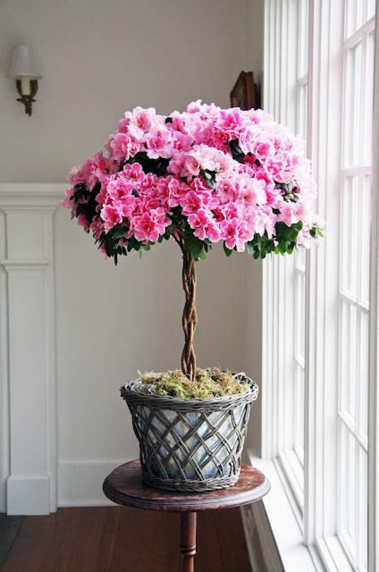 Azaleia é uma das plantas para decorar o apartamento com muita elegância e bom gosto
