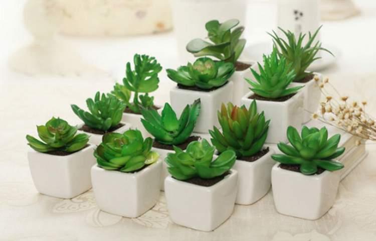 Rosa de Pedra é uma das plantas para decorar o apartamento com muita elegância e bom gosto