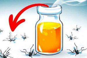 Conheça os aromas que espantam os mosquitos