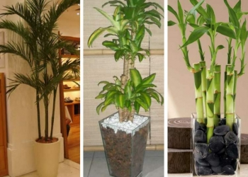 Melhores plantas para decorar o apartamento com muita elegância e bom gosto