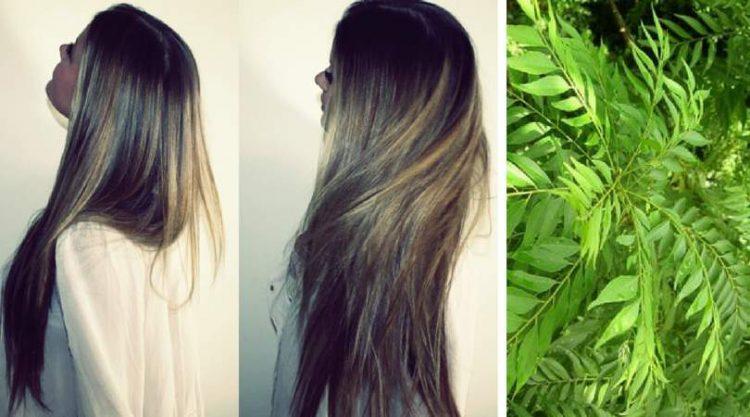 Receita de folhas de curry e óleo de coco para fazer o cabelo crescer muito rápido