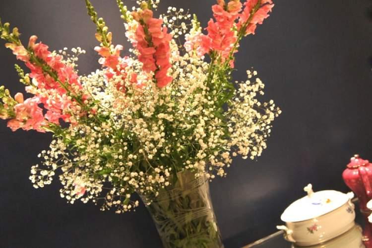 Boca-de-leão é uma das flores para buquês e arranjos
