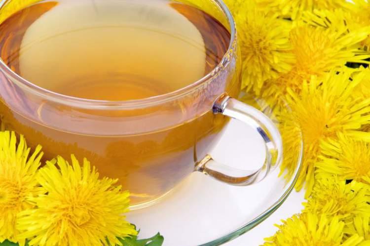 Chá de dente-de-leão ajuda a eliminar gordura em pouco tempo