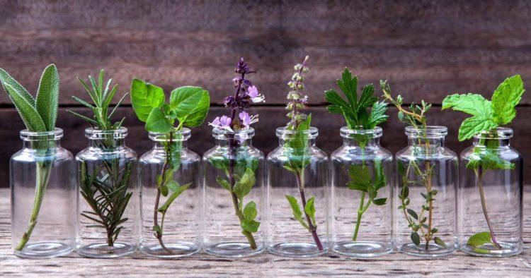 plantas decorativas que você pode cultivar em um copo com água