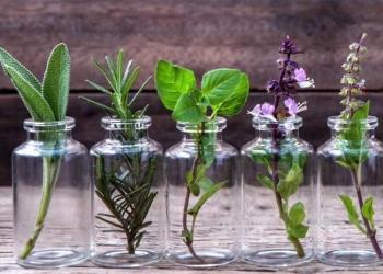 Top plantas decorativas que você pode cultivar em um copo com água