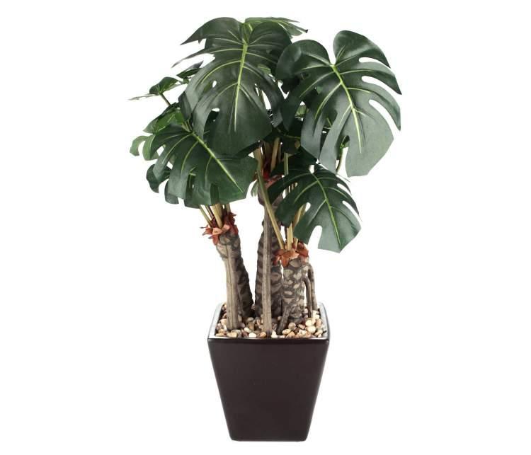Filodendro é uma das plantas que podem ser cultivadas no escritório para reduzir o estresseé uma das plantas que podem ser cultivadas no escritório para reduzir o estresse