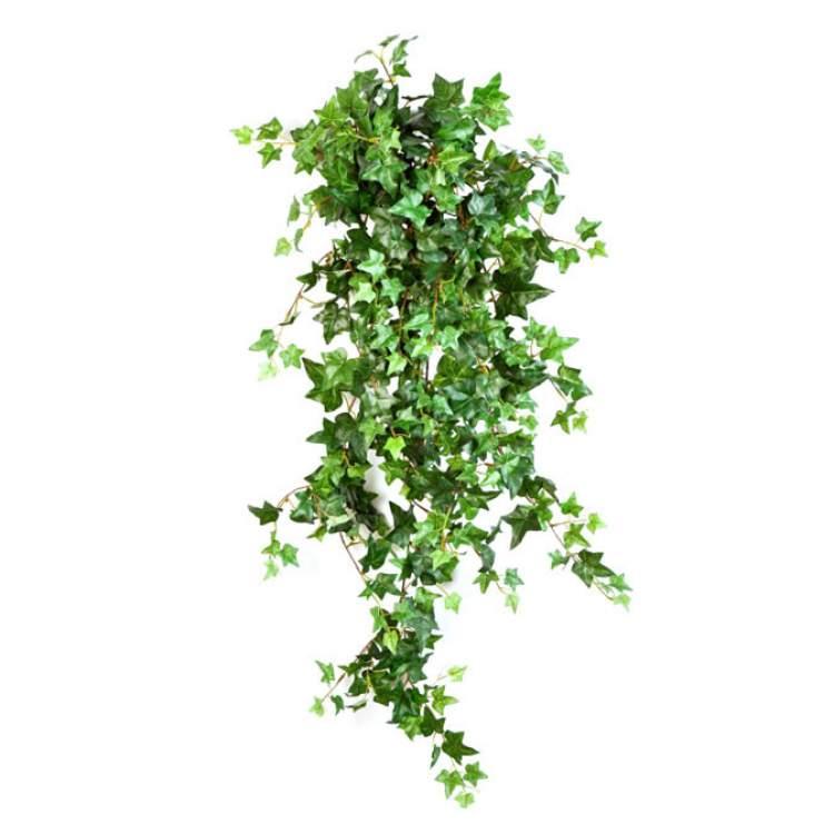 Hera é uma das plantas que podem ser cultivadas no escritório para reduzir o estresse