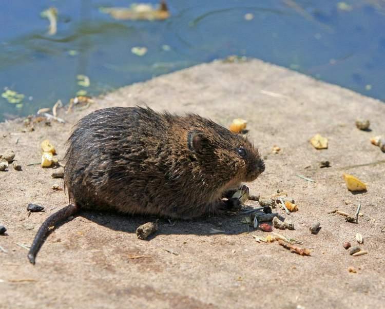 Aprenda afastar os ratos de casa
