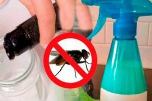 Como fazer um repelente caseiro para afastar as moscas