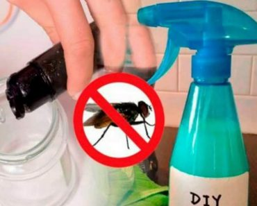 Como fazer para acabar com moscas