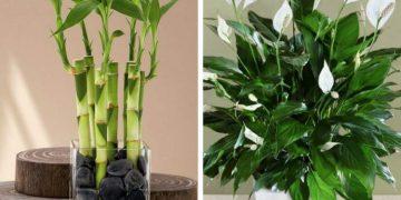 Plantas que podem ser cultivadas no escritório para reduzir o estresse