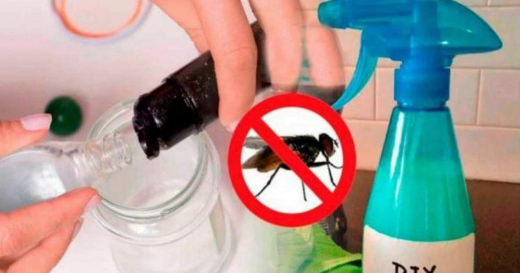 Receitas de repelentes naturais para moscas