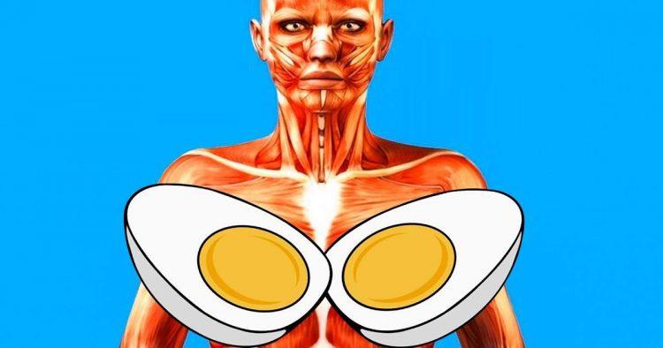 Descubra o que acontece se você comer dois ovos todos os dias