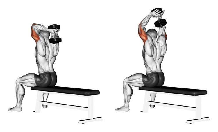 Levantamento de peso atrás da cabeça é um dos melhores exercícios para definir o músculo do tchauzinho