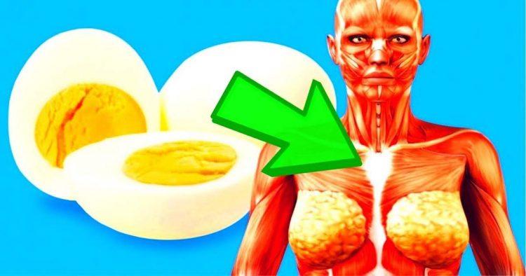 Saiba o que acontece se você comer um ovo todos os dias