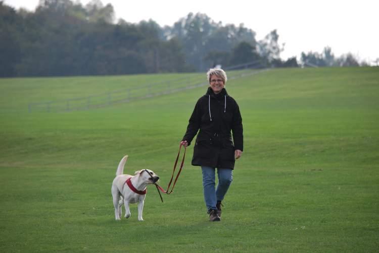 Caminhar com o animal de estimação ajuda a reduzir o risco de infarto e avc