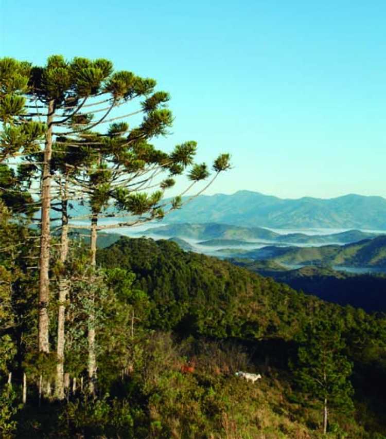 Santo Antônio do Pinhal é um dos melhores lugares para viajar no inverno