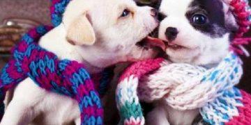 Como proteger seu cão ou gato durante o inverno