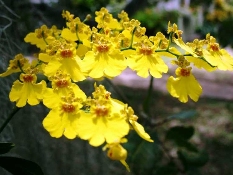 Orquídea é uma das plantas que suportam o clima frio