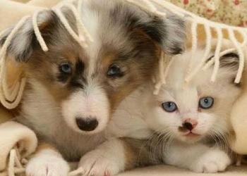 Saiba como proteger seu pet do frio