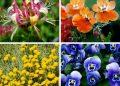 Plantas que suportam o clima frio