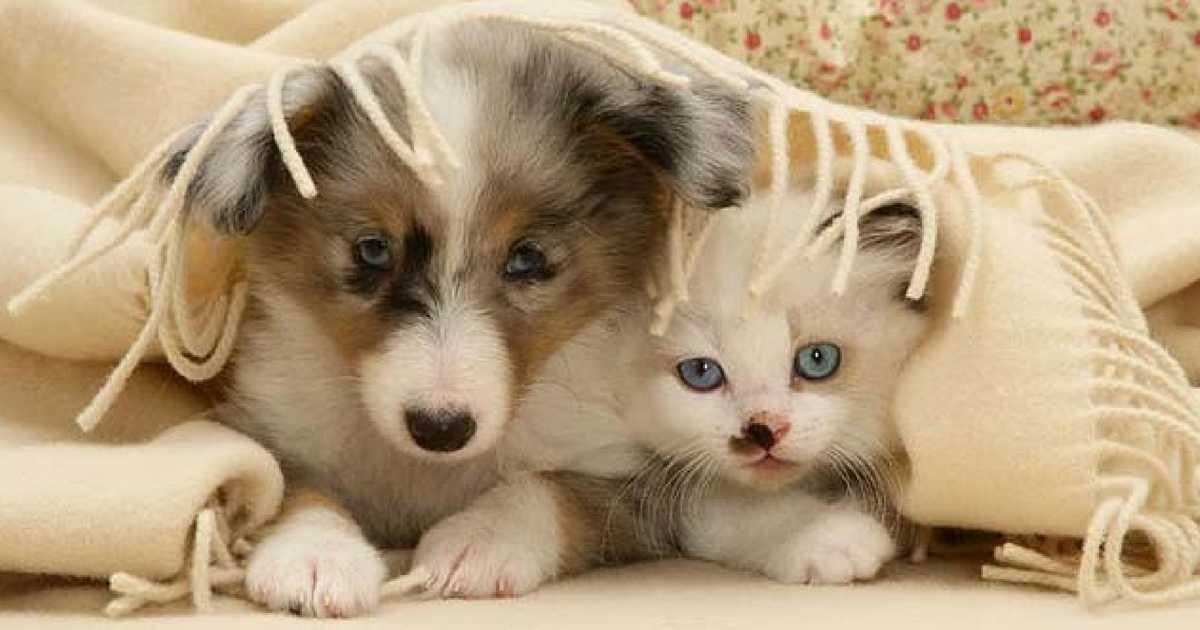 proteger seu pet do frio