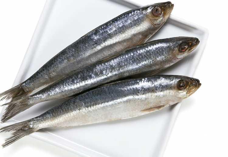 Sardinha é um dos alimentos essenciais para a saúde dos seus olhos