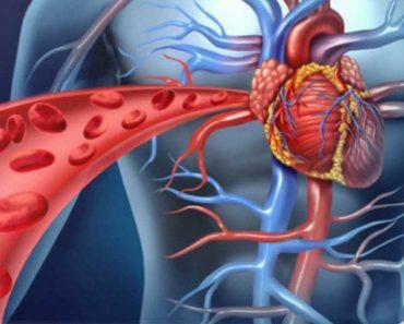 Conheça os melhores alimentos para limpar as artérias e reduzir os riscos de um infarto, derrame ou trombose
