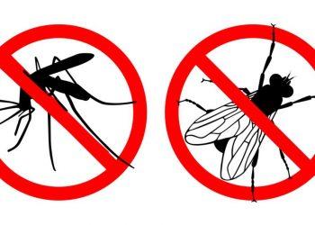 Truques caseiros para espantar moscas e mosquitos