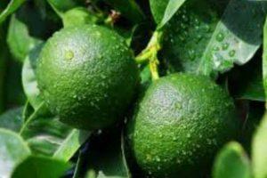O limão ajuda a tratar a celulite naturalmente